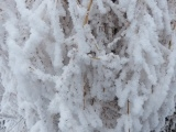 Frosted Plants IX