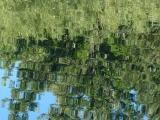 Mosaic of Tree Reflections