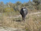 Western Pony