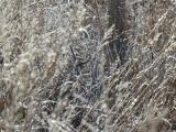 Through the Winter Veil