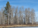 Line of Bare Trees