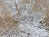 Maze of Golden Grasses in Winter