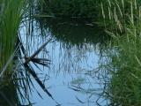 Reflections in a Small Stream