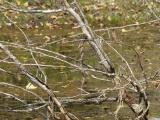 Tangle in a Small Pond