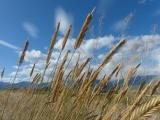 Angled Grasses against the Sky