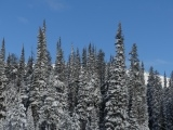 Frosted Spires at Lost Trail Pass