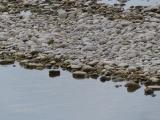 Rocks at Rivers Edge
