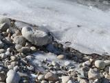 Riverside Rocks on a Winter Shore