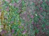 Ruby in Fuschite Detail