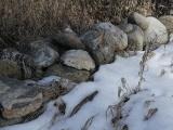 Line of Rocks in Winter