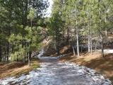 Icy Walk through Evergreens
