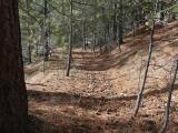 Path of Pine Needles
