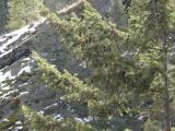 Aerial Arboreal Pine Cones