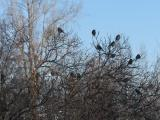 Cluster of Birds on Branches