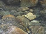 Ripples in Kootenai Creek
