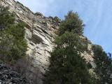 Trees below Rock