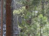 Through a Forest