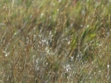 Thin Strands of Grass