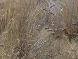 Gold and Pewter Grasses