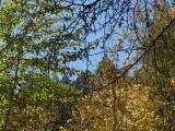 Lolo Autumn