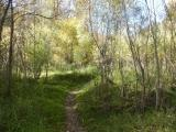 Path through Young Trees
