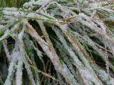 Snow on Green Grass