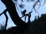 Silhouette of a Bird in a Tree