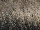 Wave of Brown Grasses
