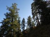 Trees on a Hillside