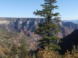 Tree and Canyon