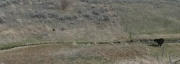 Bovine Fence Problem