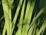 Strips of Green