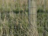 Gridwork and Grasses