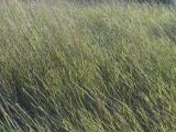 Diagonal Grasses